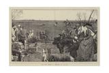 The Dog Derby, a Sketch at Altcar Giclee Print