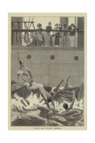Divers Off Funchal, Madeira Giclee Print