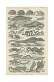 Reptiles Lámina giclée