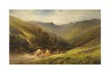Highland Cattle Giclee Print