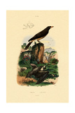 Common Pipistrelle, 1833-39 Giclee Print