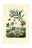 Shiny Spider Beetle, 1833-39 Giclee Print