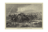 A Village Herd of Cattle in Normandy Giclee Print