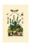 Thread-Winged Antlion, 1833-39 Giclee Print