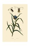 Longhorn Beetles, 1833-39 Giclee Print