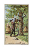 Beekeeping, Harvest of a Swarm Giclee Print