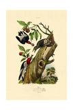Red-Headed Woodpecker, 1833-39 Giclee Print