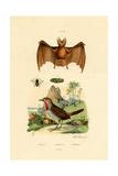 Leaf-Cutting Bee, 1833-39 Giclee Print