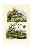 Lesser Duckweed, 1833-39 Giclee Print