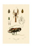 Great Green Bush Cricket, 1833-39 Giclée-tryk