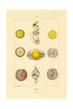 Ovology, 1833-39 Lámina giclée