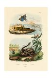 Shrimp, 1833-39 Giclee Print