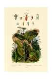 Grasshoppers, 1833-39 Giclee Print