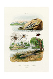 Naked Sea Slug, 1833-39 Giclee Print