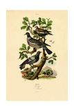 Pigeons, 1833-39 Reproduction procédé giclée