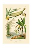 Bamboo, 1833-39 Giclee Print