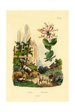 Goats, 1833-39 Giclee Print