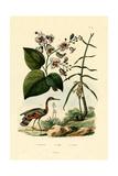 Ginger, 1833-39 Giclee Print
