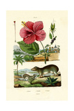 Pokeweed, 1833-39 Giclee Print