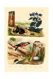 Pine Weevil, 1833-39 Giclee Print