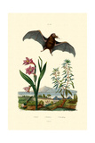 Gladiolus, 1833-39 Giclee Print