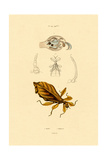 Leaf Insect, 1833-39 Giclee Print