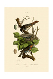Nightingale, 1833-39 Giclee Print