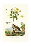 Jasmine, 1833-39 Giclee Print