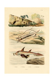 Squid, 1833-39 Giclee Print