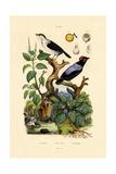 Manakins, 1833-39 Giclee Print