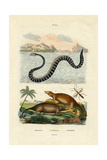 Water Rat, 1833-39 Giclee Print