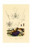 Sea Slug, 1833-39 Giclee Print