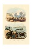 Crab, 1833-39 Giclee Print