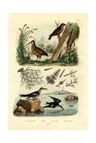 Woodcock, 1833-39 Giclee Print