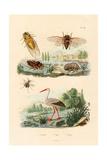 Firefly, 1833-39 Giclee Print