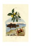 Guava, 1833-39 Giclee Print