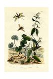 Wild Ginger, 1833-39 Giclee Print