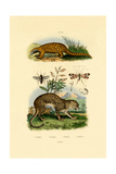 Anteater, 1833-39 Giclee Print