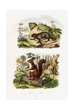Tree Rat, 1833-39 Giclee Print