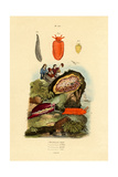 Sea Slugs, 1833-39 Giclée-Druck