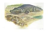 Nile Crocodile Crocodylus Niloticus Near its Laid Eggs Lámina giclée