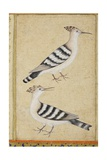 Hoopoes, C.1590 Reproduction procédé giclée