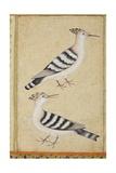 Hoopoes, C.1590 Giclee Print