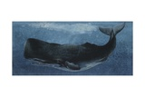 Zoology: Fishes: Mammalia, Cetacea, Sperm Whale Giclee Print