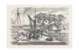 Matacong on the West Coast of Africa the Pier and Warehouses 1854 Giclee Print