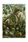 Land Molluscs or Snails and Slugs Giclee Print