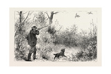 Woodcock Shooting, 1884 Giclee Print