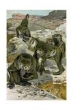 Baboons Giclee Print