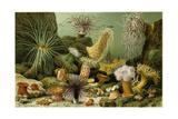 Sea Anemones Giclee Print