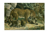 Leopard Giclee Print